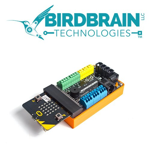 Birdbrain 500x500